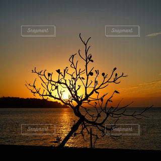 沈む夕日と影の写真・画像素材[3070458]