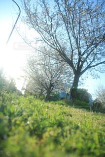 空,春,桜,森林,屋外,季節,家,樹木,朝,青春,草木,日中
