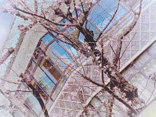 空,建物,花,春,桜,樹木