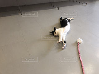 犬,猫,動物,屋内,黒,床,立つ