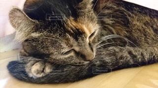 猫,動物,かわいい,寝転ぶ,子猫,ネコ科の動物