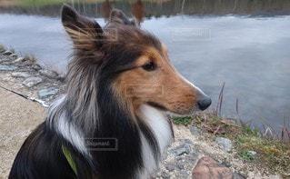 犬,動物,屋外,散歩,茶色