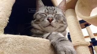 猫,動物,屋内,かわいい,ネコ科の動物