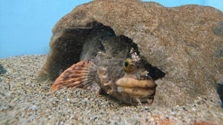魚,水族館,岩,水中,隠れる
