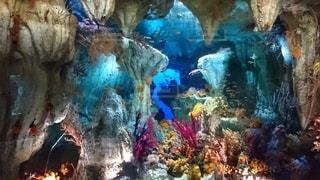 魚,カラフル,水族館,鮮やか,水中,カラー,海底
