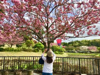 女性,1人,30代,空,公園,花,春,桜,木,散歩,花見,お花見,イベント