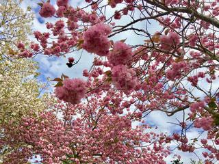 空,花,春,桜,木,花見,お花見,イベント