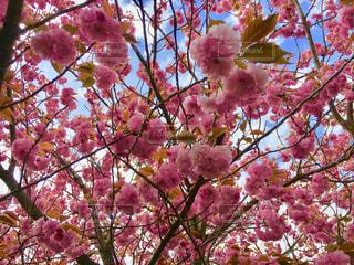 空,花,春,桜,木,花見,満開,お花見,イベント