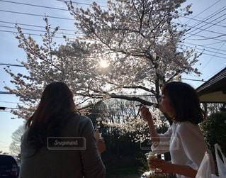 女性,2人,30代,空,花,春,桜,木,花見,お花見,イベント