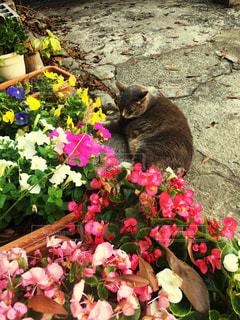 猫,花,動物,屋外,鮮やか,草木