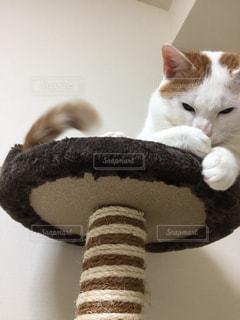 猫,動物,屋内,白