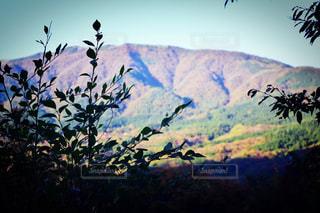 自然,空,花,山,樹木,草木