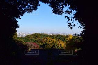 自然,風景,空,秋,森林,屋外,樹木,草木,草木の洞窟