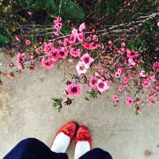 女性,1人,公園,花,屋外,ピンク,赤,足元,鮮やか,樹木,スカート,カラー,パンプス,足下