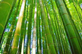 緑,木漏れ日,竹,竹林,報国寺,杖,静止