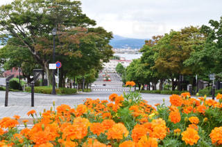 空,花,屋外,北海道,オレンジ,樹木,坂,カラー,函館,下り坂,日中