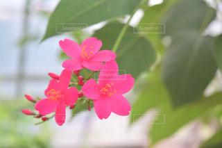 花,屋外,ピンク,緑,花びら,ビビット,景観,草木,フローラ