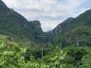 背景に山のある茂みの写真・画像素材[3056420]