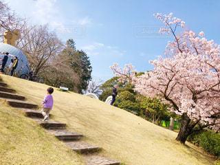 子ども,家族,空,公園,花,桜,青空,草,樹木,草木