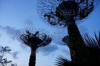 空,夕暮れ,シンガポール,ヤシの木,マリーナベイサンズ,マジックアワー,ガーデンズ・バイ・ザ・ベイ,国立公園,パーム,マリーナ・ベイ・サンズ,ガーデンズバイザベイ,人口緑地