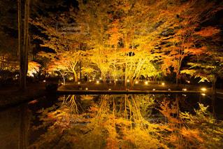 自然,風景,紅葉,樹木,ライトアップ