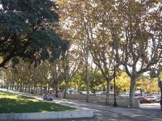 秋,カップル,屋外,海外,道路,樹木,道,スペイン,通り,日中