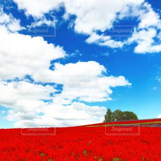 自然,空,花,青い空,北海道,景色,大地
