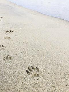 犬,自然,屋外,砂,ビーチ,砂浜,海岸,フット プリント