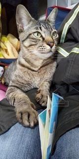 猫,屋内,ネコ,お年玉,猫に小判