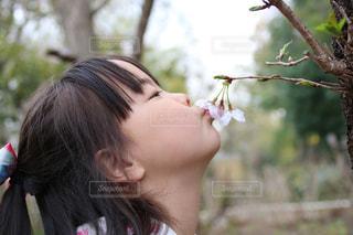 女性,子ども,花,桜,屋外,少女,満開,キス,樹木,お花見,人,女児,5歳,5才,ファーストキス