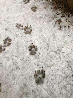 雪の日の写真・画像素材[4144625]