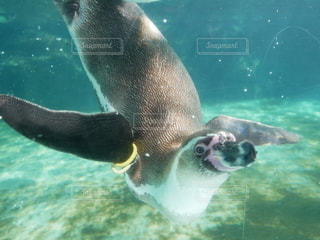 動物,水族館,泳ぐ,水中