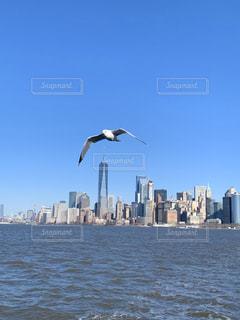 空,動物,鳥,屋外,水面,都会,旅行,高層ビル,日中