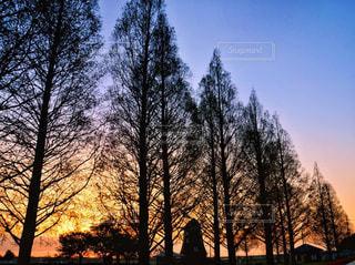 自然,風景,空,屋外,風車,シルエット,樹木,日の出