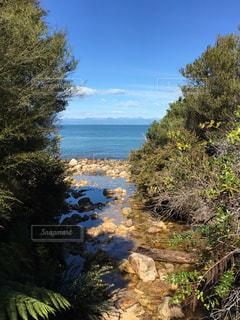 自然,風景,海,ビーチ,樹木,眺め