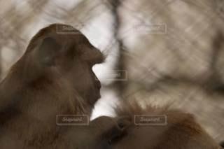 公園,猿,動物,茶色,動物園