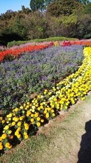 花,晴れ,ガーデン