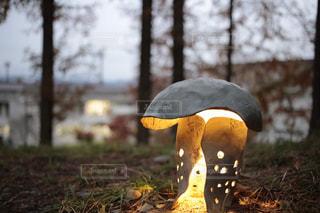 自然,屋外,森,かわいい,ランタン,灯り,ムーミン,きのこ,あけぼの公園