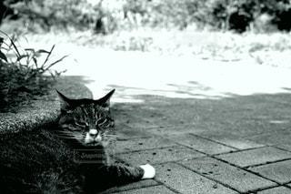 地面に横たわっている猫の写真・画像素材[3343187]