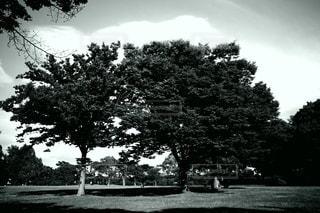 この木なんの木の写真・画像素材[3343185]