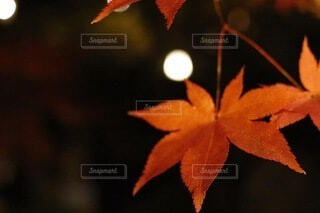 秋の訪れの写真・画像素材[3734016]
