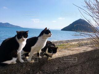 猫,海,動物,島,兄弟,ひなたぼっこ