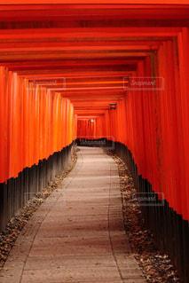 京都,神社,赤,鳥居,鮮やか,旅行,古風,伝統,稲荷