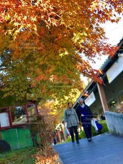 紅葉の通りを歩く夫婦 - No.840578
