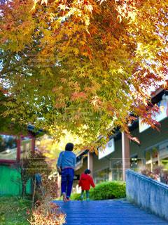 紅葉の下を通る親子の写真・画像素材[840586]