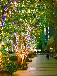 オフィス街、帰り道を照らすイルミネーションの写真・画像素材[914739]