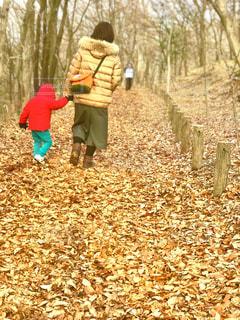 落ち葉の絨毯を散歩の写真・画像素材[1015597]