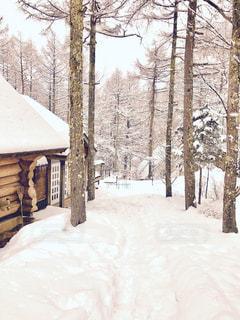 雪深い森のロッヂの写真・画像素材[1732410]