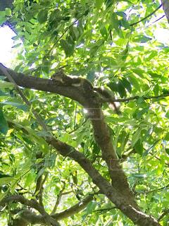 リスが木の上でまったりと日光浴をしています。の写真・画像素材[2068951]