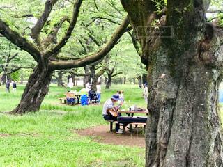 新緑鮮やかな樹々の間から歌が聞こえてきました。の写真・画像素材[2263166]